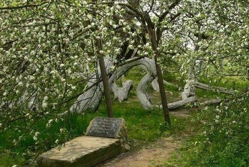 Ябълка-чудо расте в Украйна