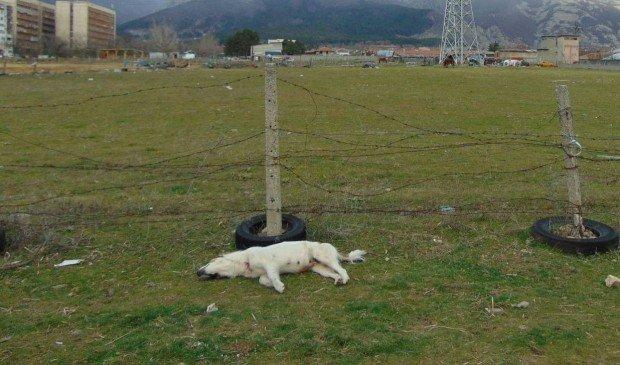 Намериха убито куче с кървяща рана край Сопот