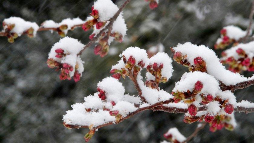 Още 2 дни в капана на ледената пролет