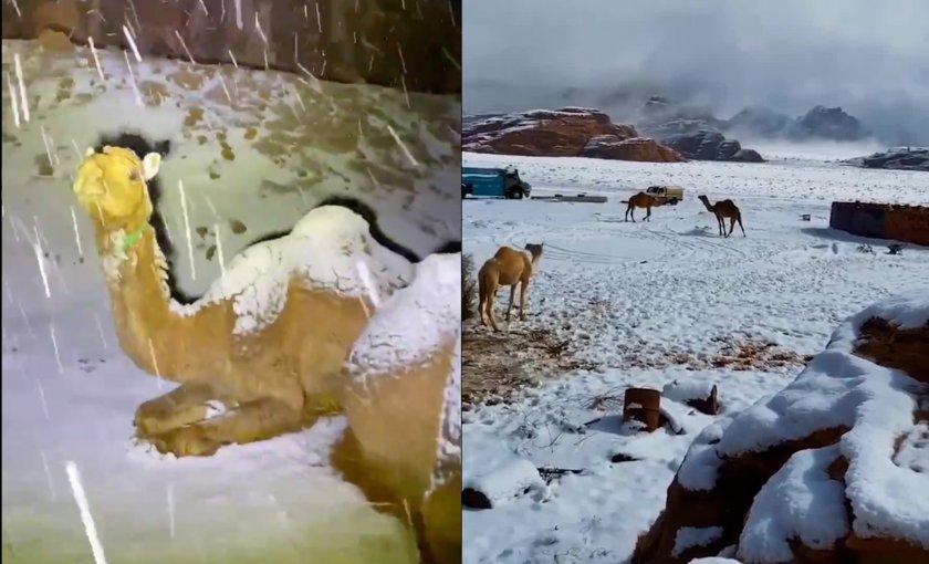 Сняг затрупа Саудитска Арабия (СНИМКИ)