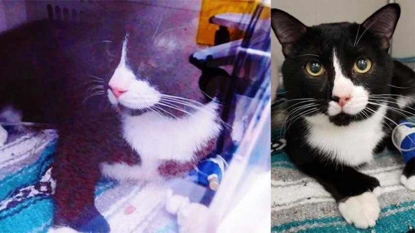 Котка оцеля след 35 минути въртене в пералнята