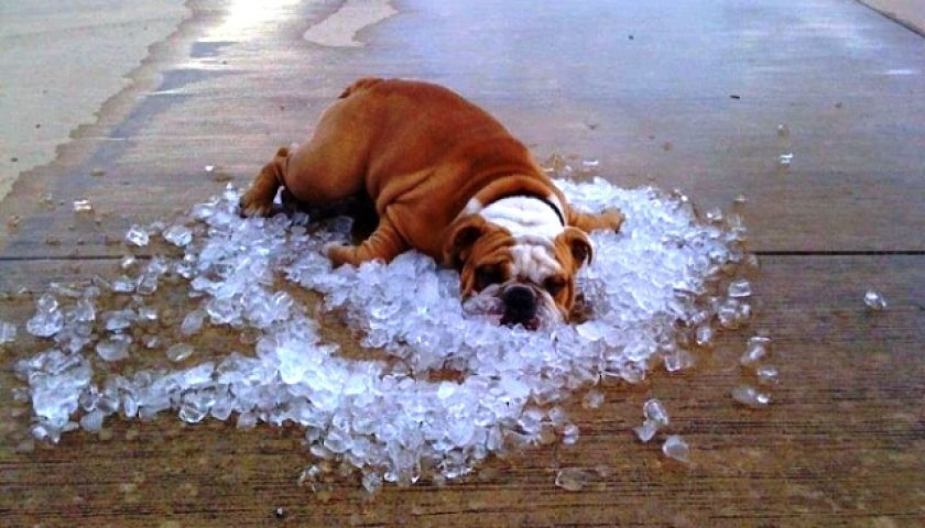 Над 40 градуса през август