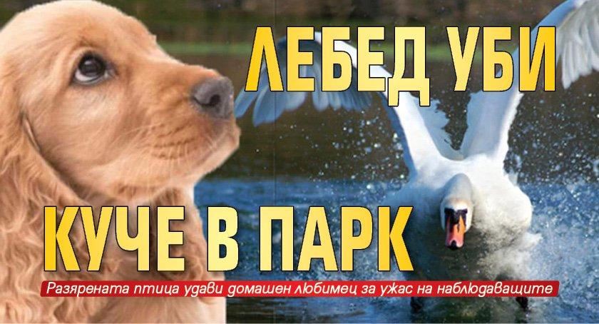 Лебед уби куче в парк