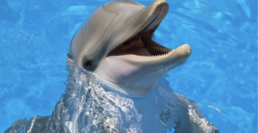 Трогателно: Делфин се самоубил заради жена