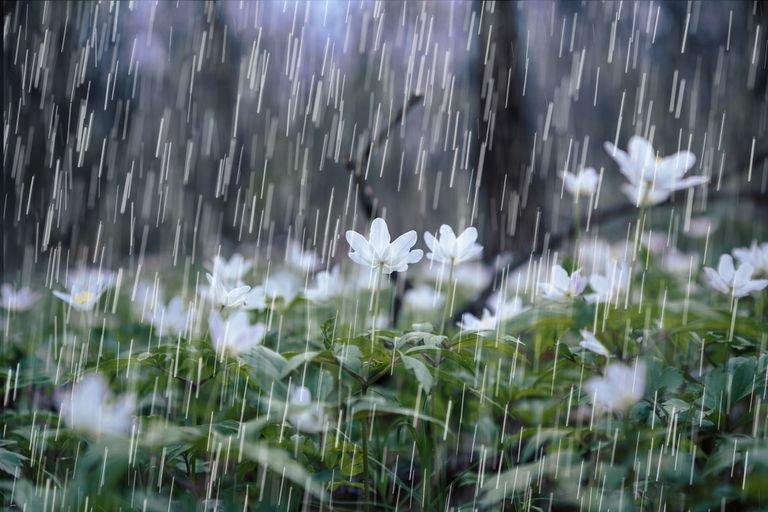 Идат студ и дъжд през уикенда