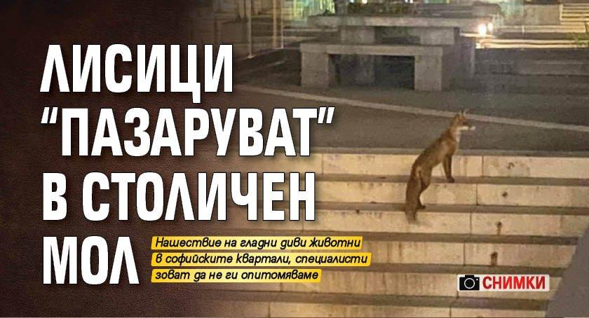 """Лисици """"пазаруват"""" в столичен мол (СНИМКИ)"""