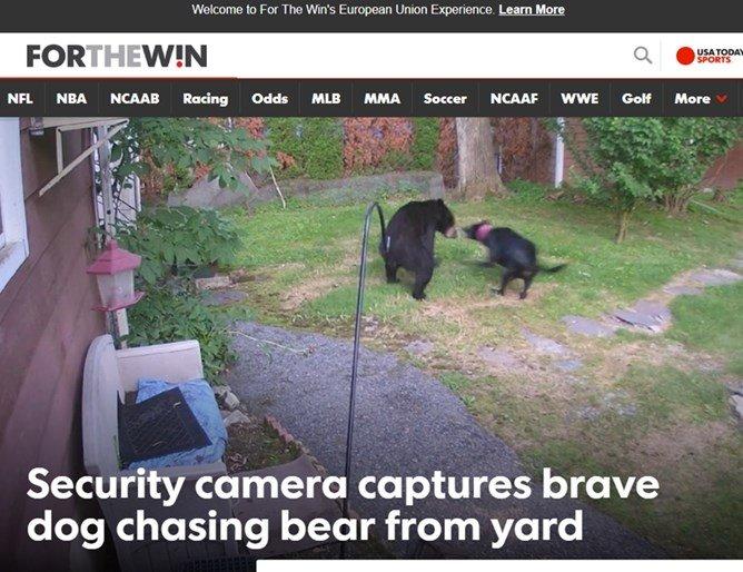 Вярно куче пропъди мечка