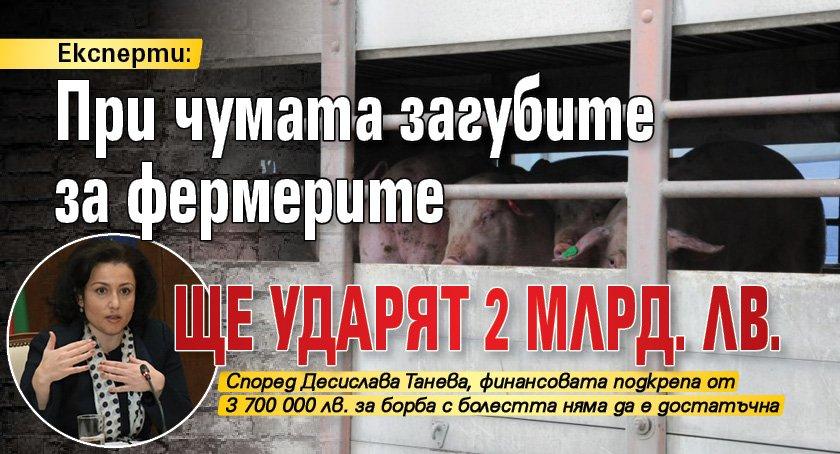 Експерти: При чумата загубите за фермерите ще ударят 2 млрд. лв.