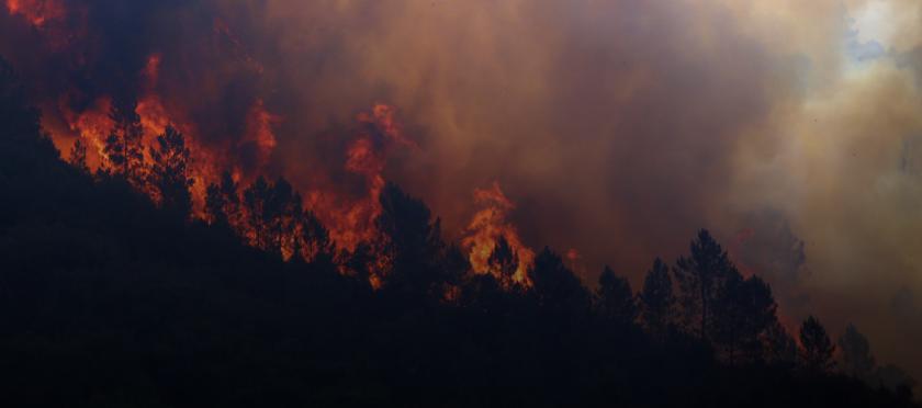 Не хвърляйте фасове от колата - пламват гори