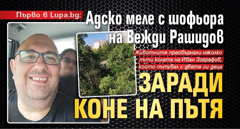 Първо в Lupa.bg: Адско меле с шофьора на Вежди Рашидов заради коне на пътя