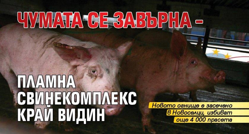 Чумата се завърна – пламна свинекомплекс край Видин
