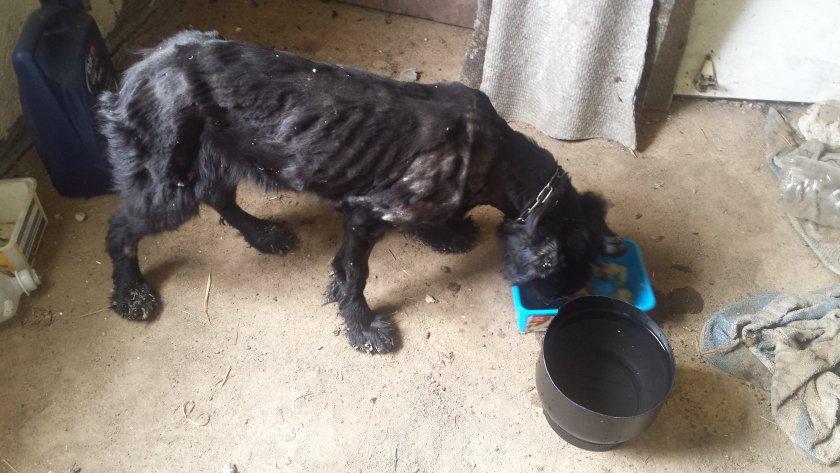Полицията в Германия разби верига за търговия с кучета от Източна Европа
