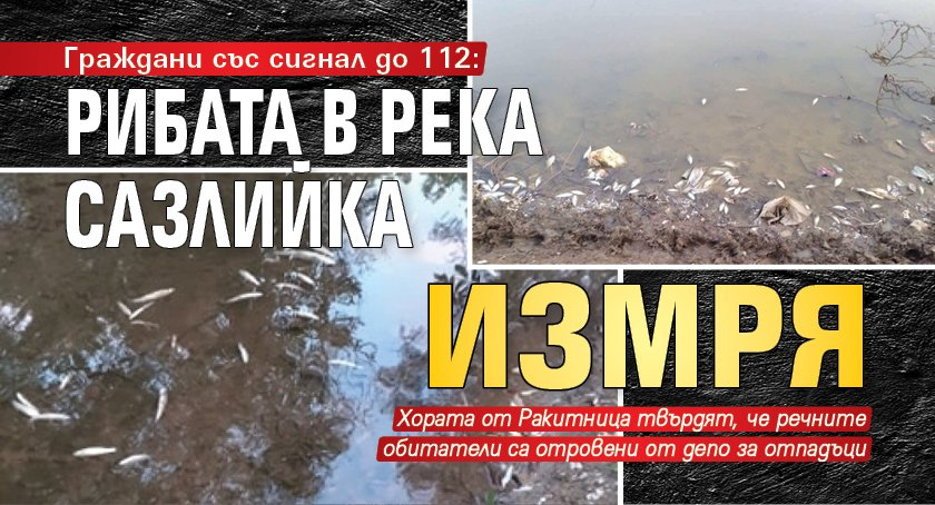Граждани със сигнал до 112: Рибата в река Сазлийка измря