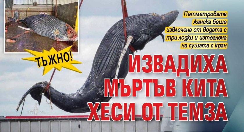 ТЪЖНО! Извадиха мъртъв кита Хеси от Темза