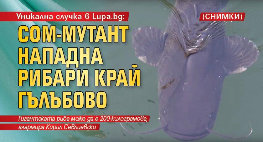Уникална случка в Lupa.bg: Сом-мутант нападна рибари край Гълъбово (СНИМКИ)