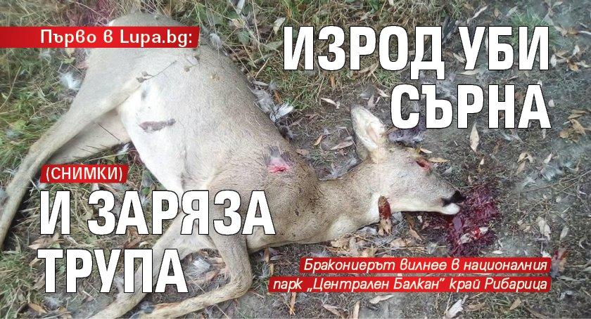 Първо в Lupa.bg: Изрод уби сърна и заряза трупа (СНИМКИ)