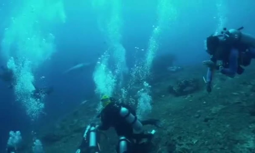 Гигантска акула ужаси водолази (ВИДЕО)