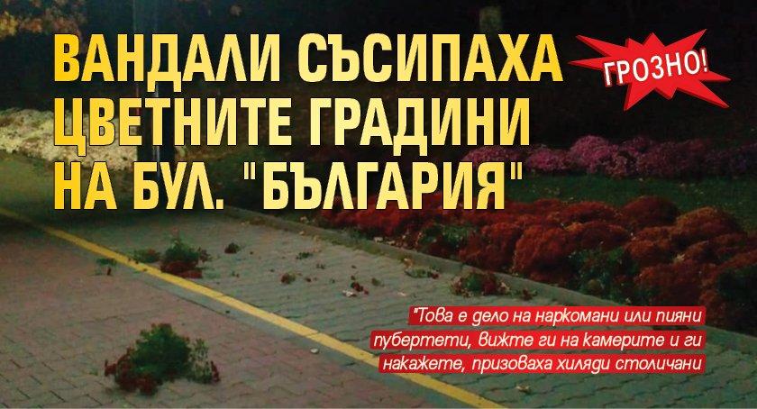 """Грозно! Вандали съсипаха цветните градини на бул. """"България"""""""