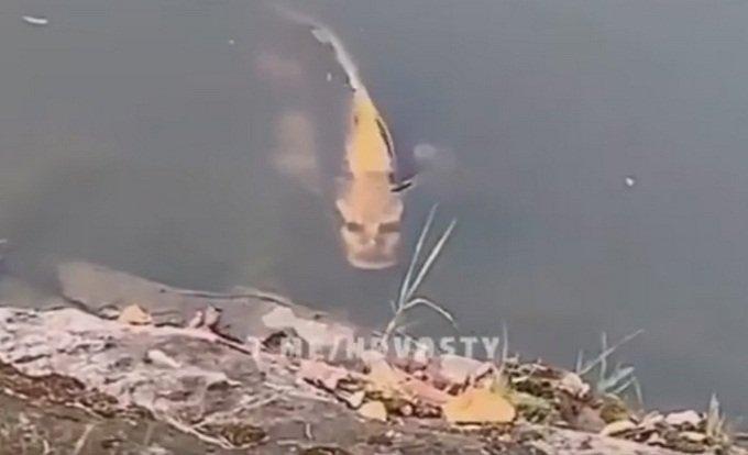 Риба с лице на човек плаши в Китай