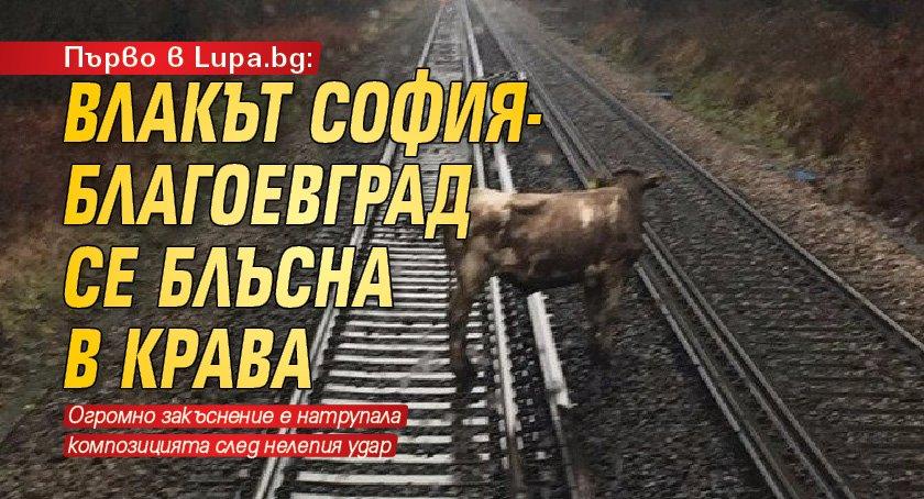 Първо в Lupa.bg: Влакът София-Благоевград се блъсна в крава