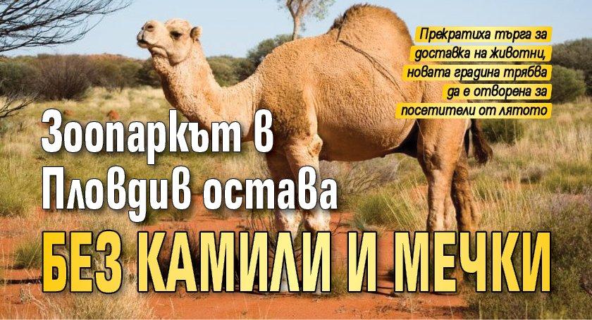 Зоопаркът в Пловдив остава без камили и мечки