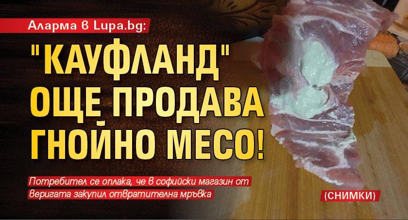 Аларма в Lupa.bg: 'Кауфланд' още продава гнойно месо! (СНИМКИ)