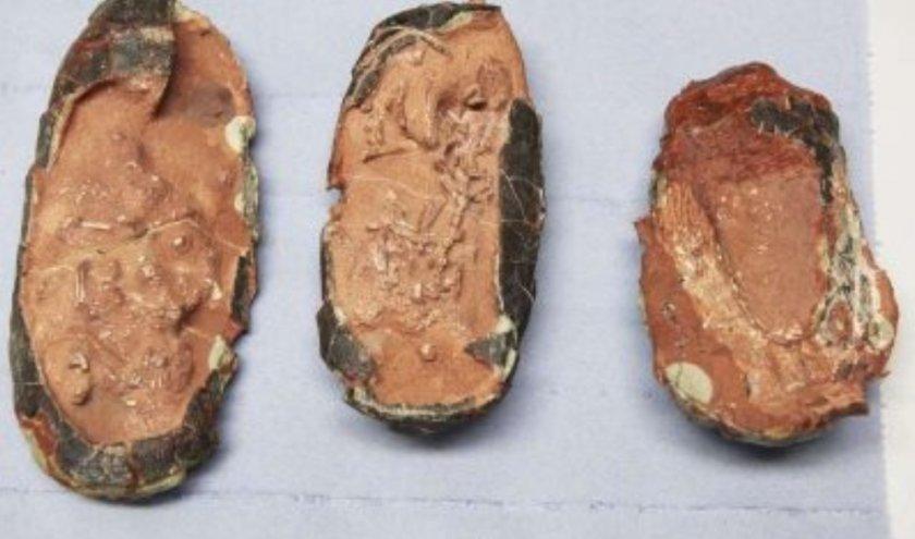 Три запазени яйца на динозавър откриха в Китай