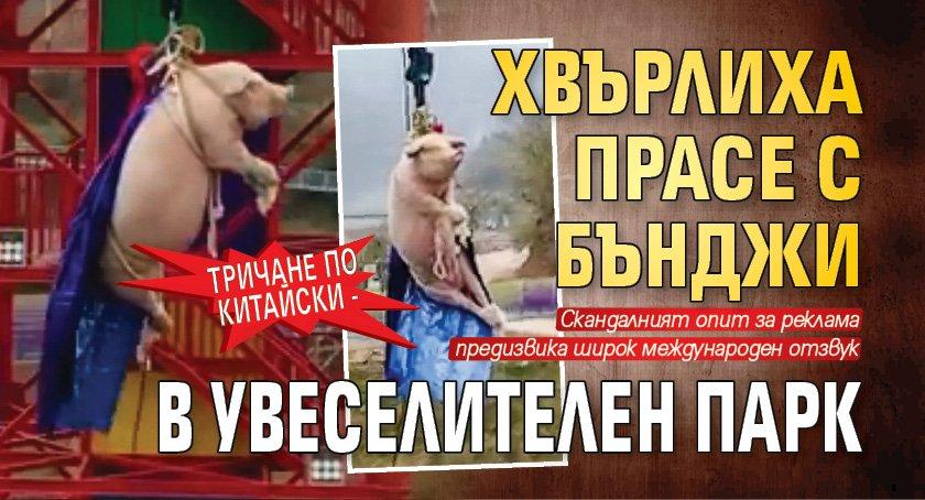 Тричане по китайски - хвърлиха прасе с бънджи в увеселителен парк (ВИДЕО)