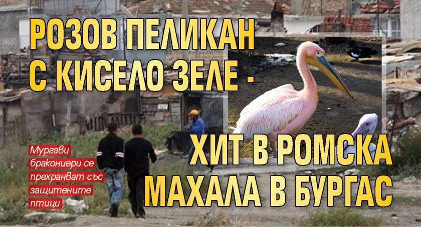 Розов пеликан с кисело зеле - хит в ромска махала в Бургас