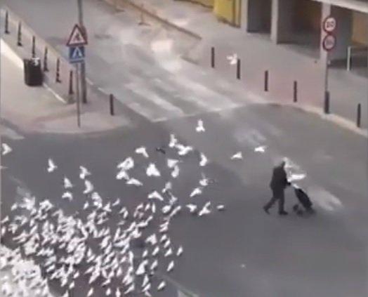 Гладни гълъби нападат в Испания