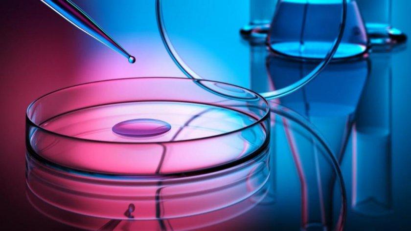 Немският гигант за съхранение на стволови клетки стъпи у нас