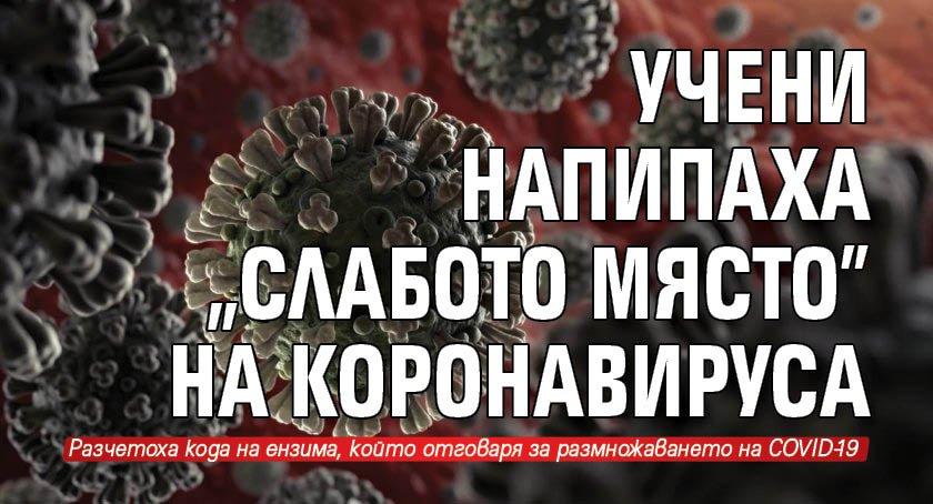 """Учени напипаха """"слабото място"""" на коронавируса"""