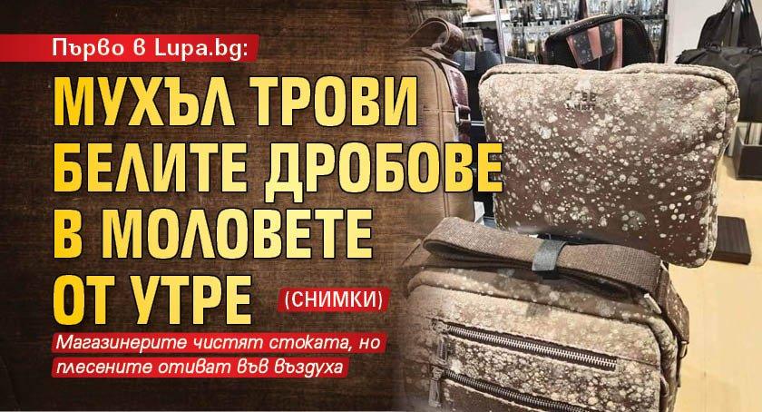 Първо в Lupa.bg: Мухъл трови белите дробове в моловете от утре (СНИМКИ)