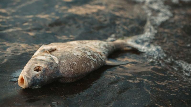 Проверяват река Янтра заради измиране на риба