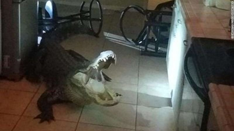 Крокодил влезе в къща