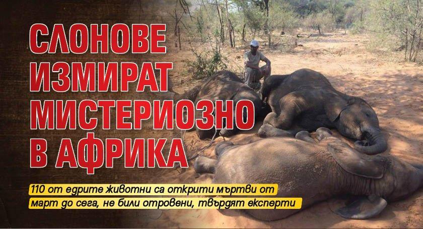 Слонове измират мистериозно в Африка