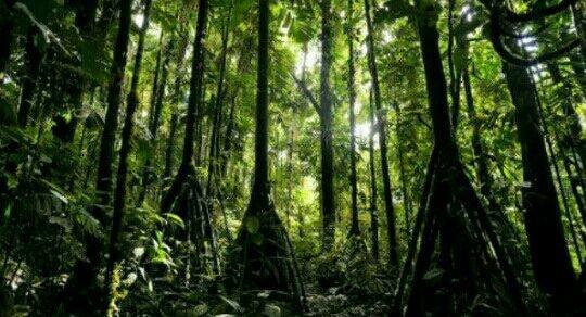 Ходеща палма – има такова чудо
