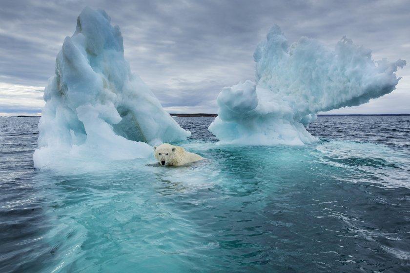 Ледената епоха чука на вратата
