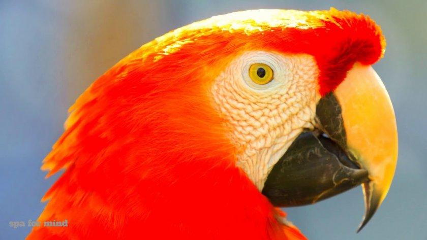 Пожарникари гониха избягал папагал в Лом