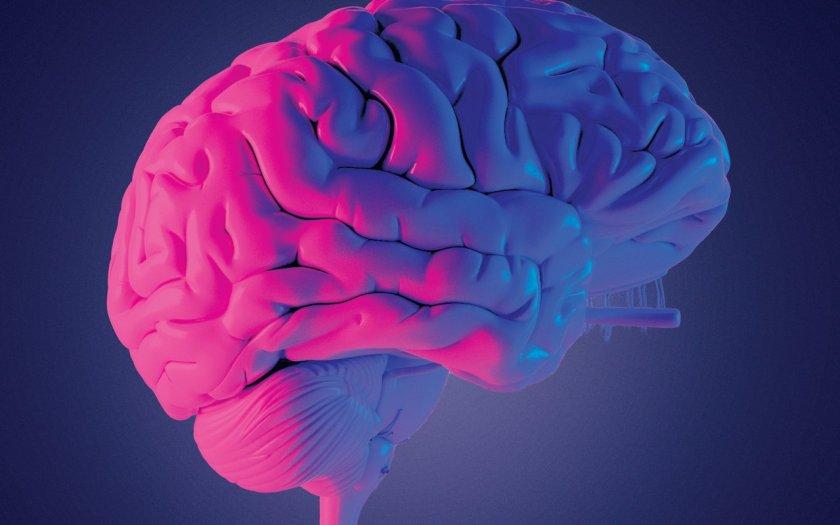 15 удивителни факта за човешкия мозък
