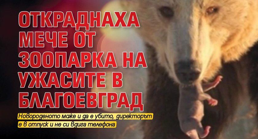 Откраднаха мече от зоопарка на ужасите в Благоевград