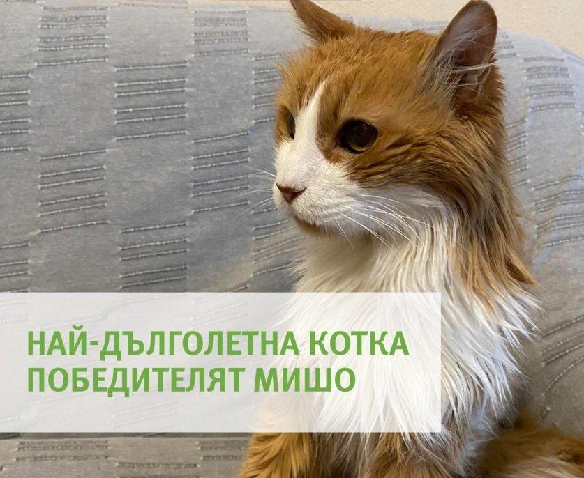 Ето я най-старата котка в България