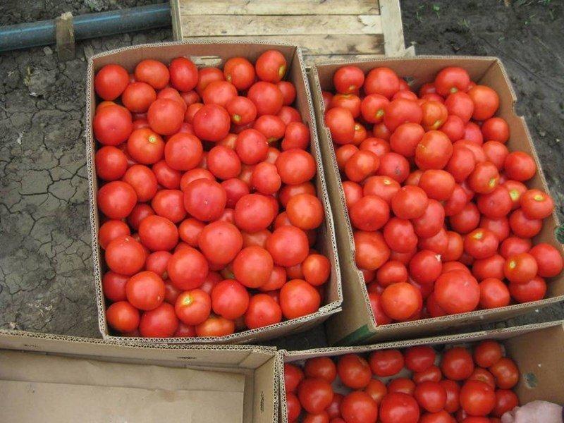 Вносните домати и краставици вече са по-евтини