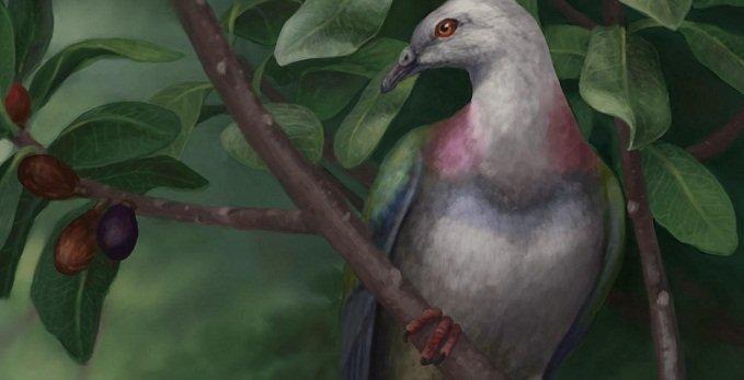 Гълъбите са били гиганти