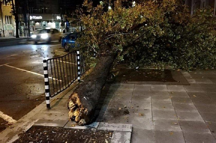 Бурята в София бутна 15 дървета