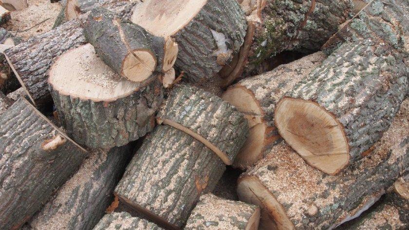 Разбиха организирана престъпна група за незаконен добив на дървесина