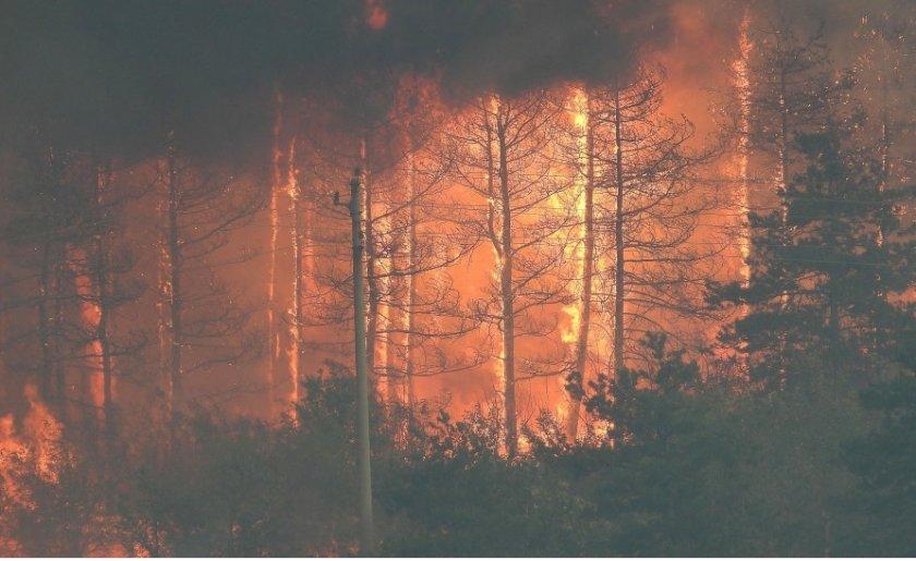 Лесово продължава да гори