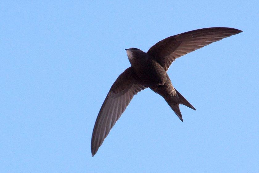 УЖАС: Десетки птици изгоряха в Казанлък