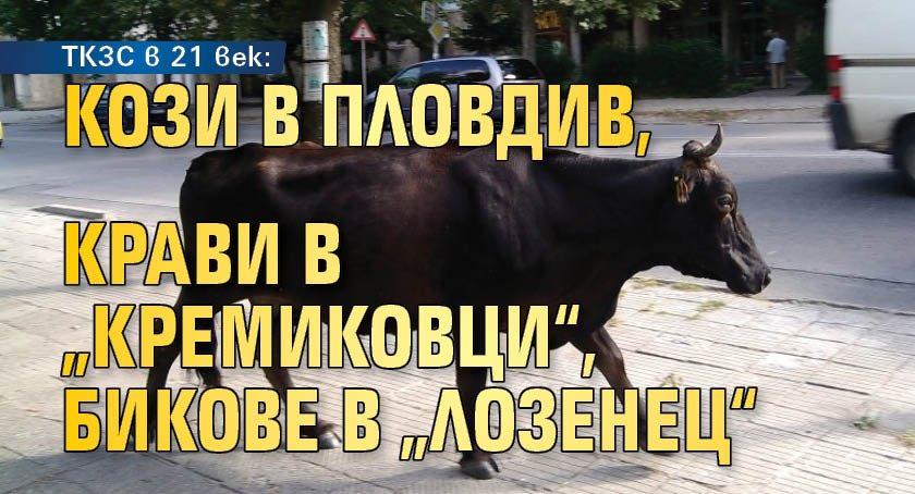"""ТКЗС в 21 век: Кози в Пловдив, крави в """"Кремиковци"""", бикове в """"Лозенец"""""""
