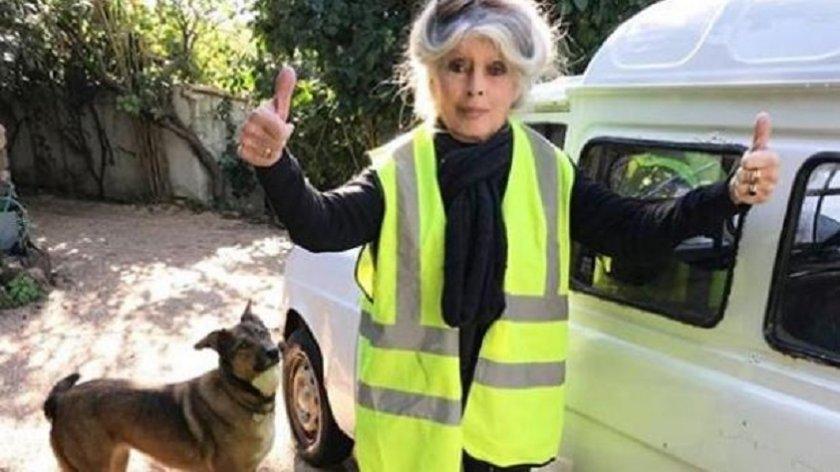 Бриджит Бардо празнува 86 в приют за кучета
